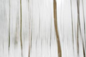 A0O14971 Winterwald