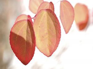 PA139758-3 Braunlage Herbstfarben
