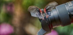 1 271 Schmetterling