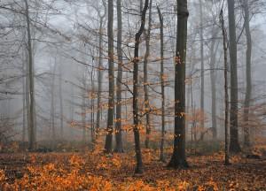 09 Nebelwald