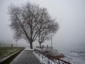 1 275 Winter-am Rhein