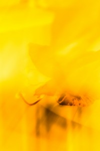 2 276 2 Einfach gelb