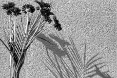 Blume roh