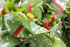 2_283_bunter-Salat