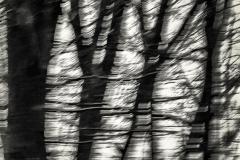 03_Tanz-der-Bäume_281_C