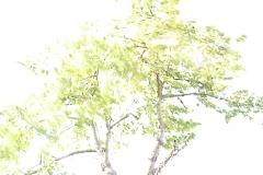 09_Frühlingserwachen_273_C